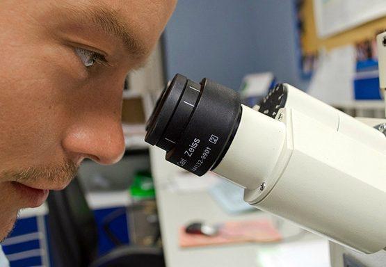 Microscopio-